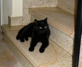 Katze Tilly